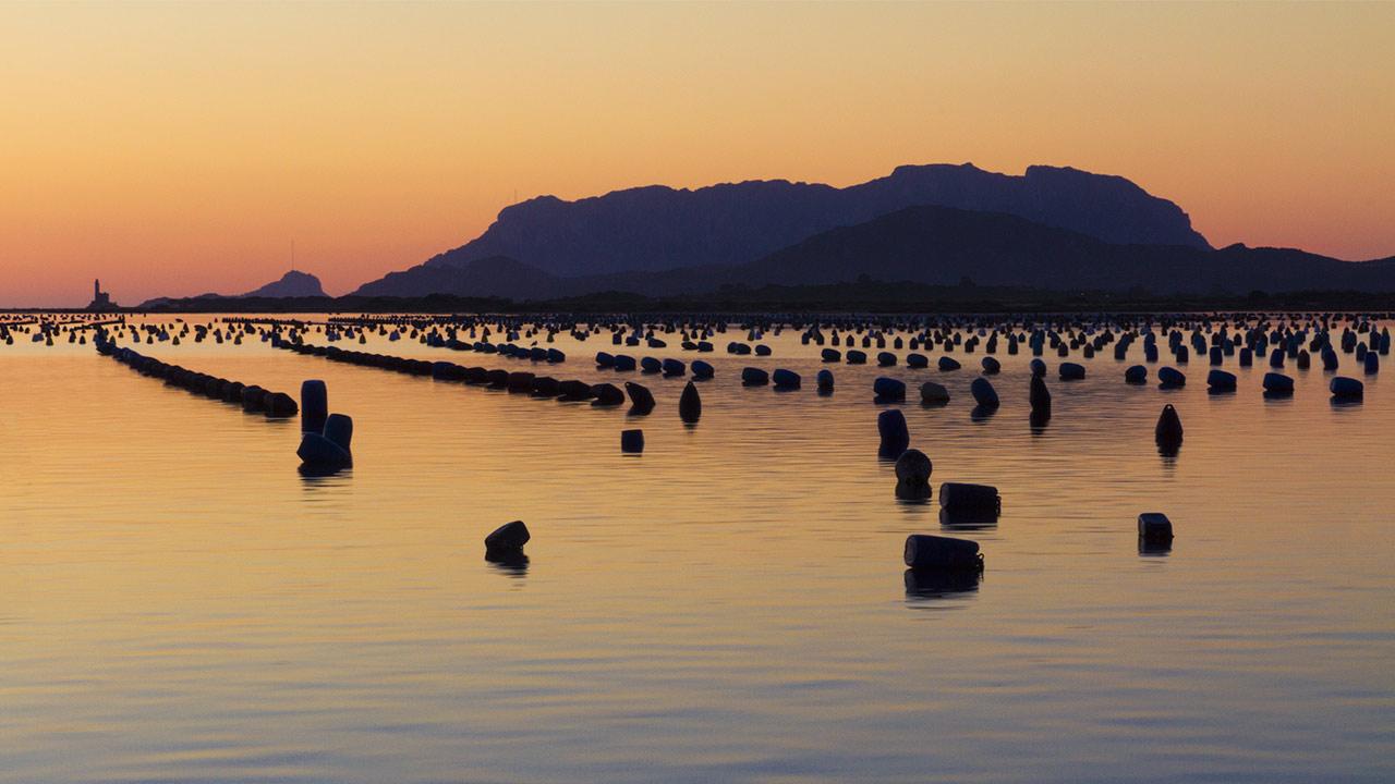 filari-di-cozze-alla-marina-di-olbia-al-tramonto