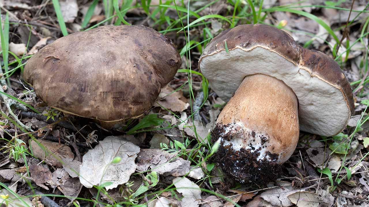 funghi-hello-olbia